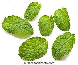 feuilles, isolé, arrière-plan., frais, blanc, menthe