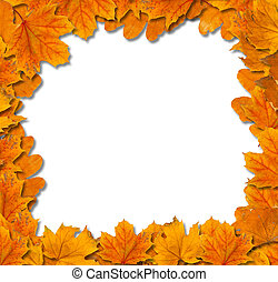 feuilles, isolé, automne, clair, fond, blanc