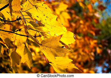 feuilles, jaune, automne