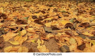 feuilles jaune, baissé