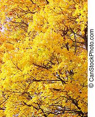 feuilles jaune, fond