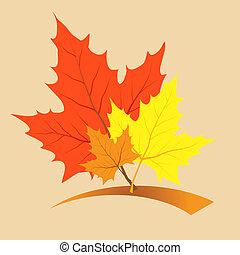 feuilles, l, érable, multi-coloré