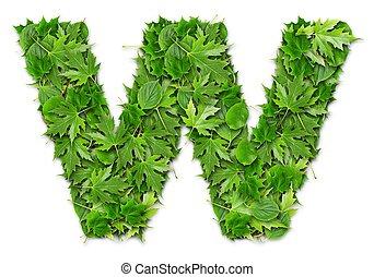feuilles, lettre