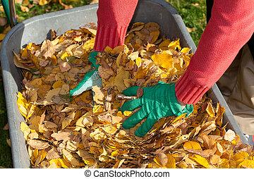 feuilles, mains