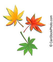 feuilles, marijuana