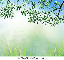 feuilles, matin, lumière, arbre, vert, branche