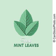feuilles, menthe