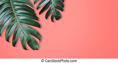 feuilles, minimal, couleur d'arrière-plan, corail, été, exotique, philodendron