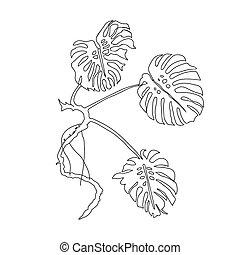 feuilles, monstera