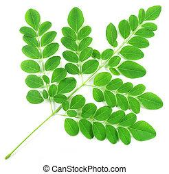 feuilles, moringa, comestible