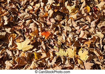 feuilles mortes, fond, texture