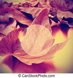 feuilles, mot, séché, automne