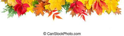 feuilles, naturel, fond, automne