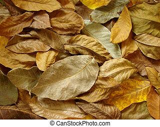 feuilles, noix