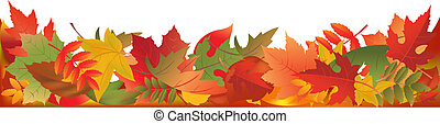 feuilles, panorama, automne