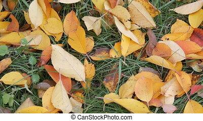 feuilles, parc, jaune, automne, herbe verte, baissé