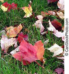 feuilles, pelouse, automne