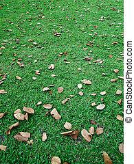 feuilles, pelouse verte, automne
