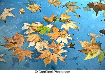 feuilles, piscine