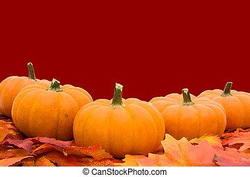 feuilles, potirons, automne