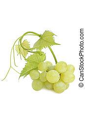 feuilles, raisins verts