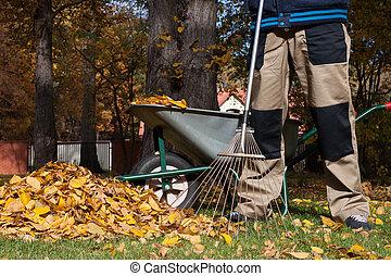 feuilles, ratisser, homme