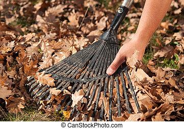 feuilles, ratisser, jardin, homme