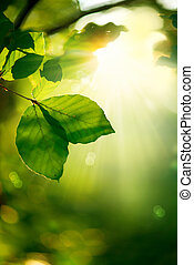 feuilles, rayons soleil, vert, arrière-plan., nature
