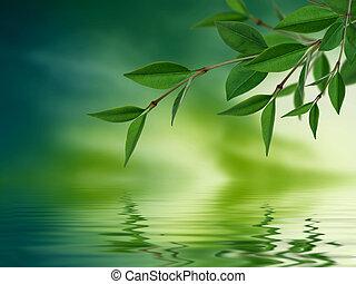feuilles, refléter, dans, eau