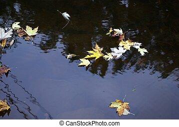 feuilles, rivière, automne