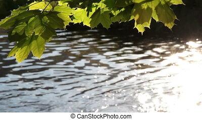 feuilles, rivière, vert