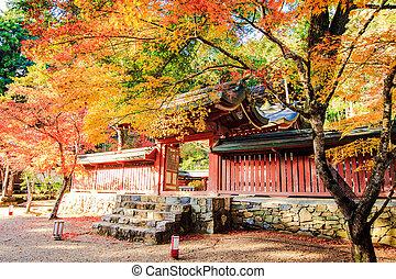 feuilles rouge, de, les, érable, dans, automne