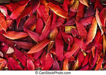 feuilles, rouges, automne