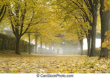 feuilles, ruelle, automne, brouillard, mist., baissé, park.