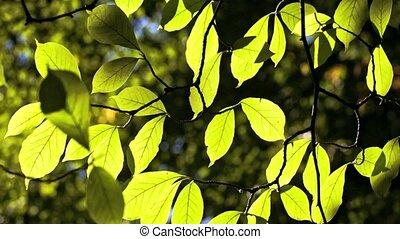 feuilles, soleil