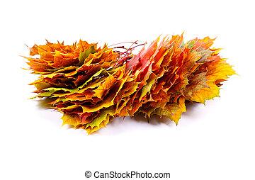 feuilles, tas, automne