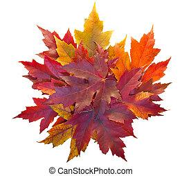 feuilles, tas, isolé, érable, automne