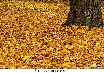 feuilles, terrestre, couleur automne, parc