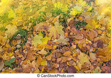 feuilles, texture., automne, automne, coloré, fond