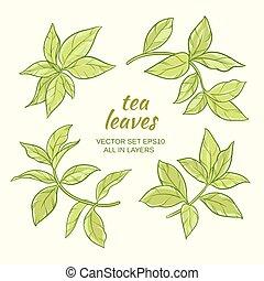 feuilles thé, ensemble