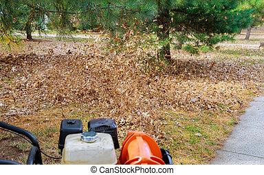 feuilles, turbine, nettoyage, homme, yard, automne, vent, jaune, travail, coups, fermé, pelouse, rouges, baissé