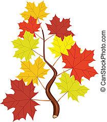 feuilles, vecteur, érable, branche, automne
