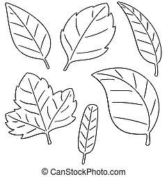 feuilles, vecteur, ensemble