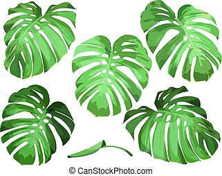 feuilles, vecteur, monstera