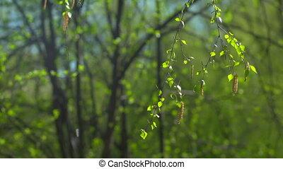 feuilles, vent, branche, mouvementde va-et-vient