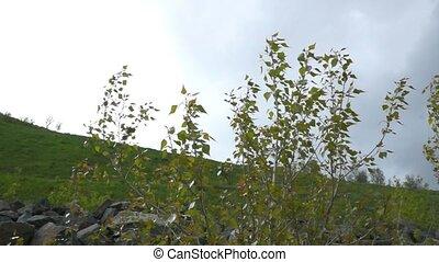 feuilles, vent
