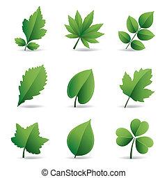 feuilles, vert, élément