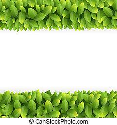 feuilles, vert, cadre