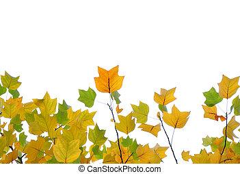 feuilles, vert, jaune, automne