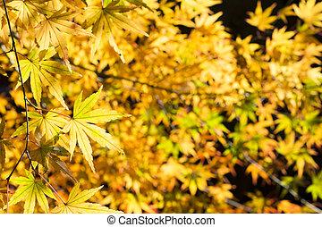 feuilles, vert, jaune